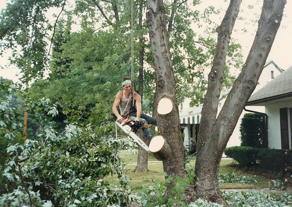 Shreiner Tree Care working on a silver maple tree, 1987