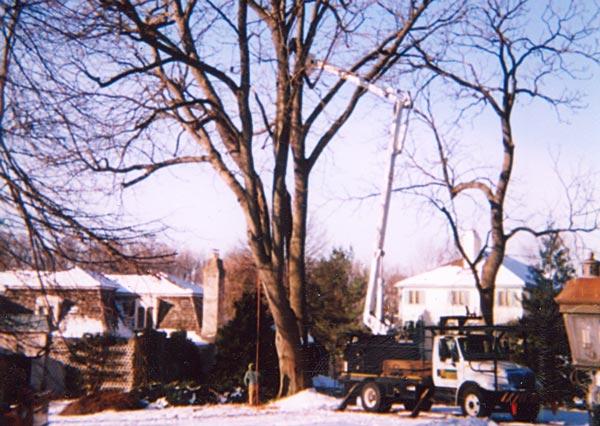 Shreiner Tree Care's bucket truck in 2001