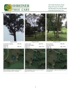 Shreiner Golf course tree services, sample inventory sheet