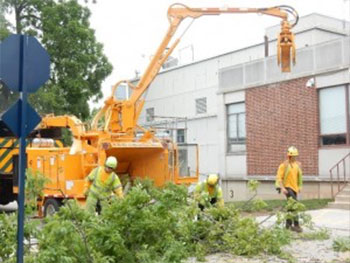 Shreiner Tree Care - Tree Removal - Safety Equipment for Tree Removal